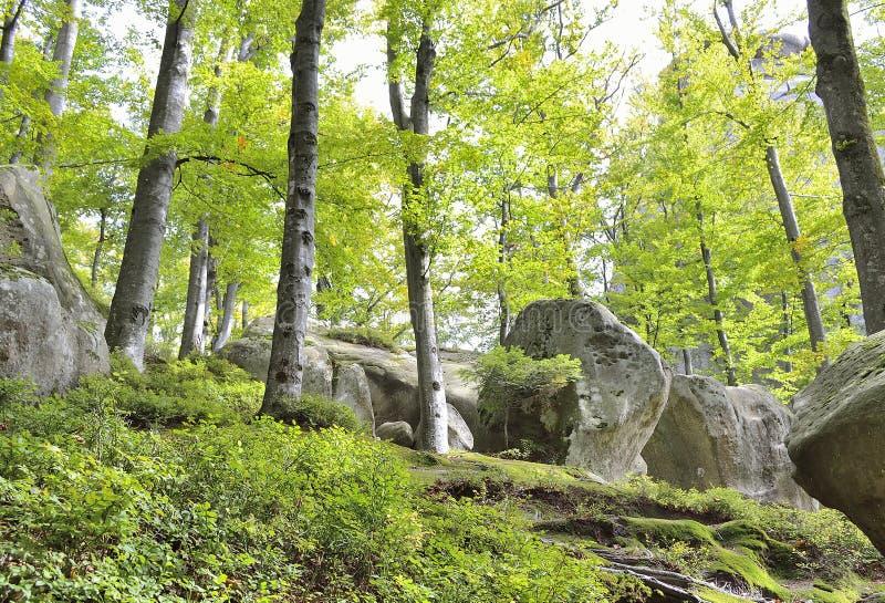 Download Pedras na floresta foto de stock. Imagem de folhas, montanhas - 29839418