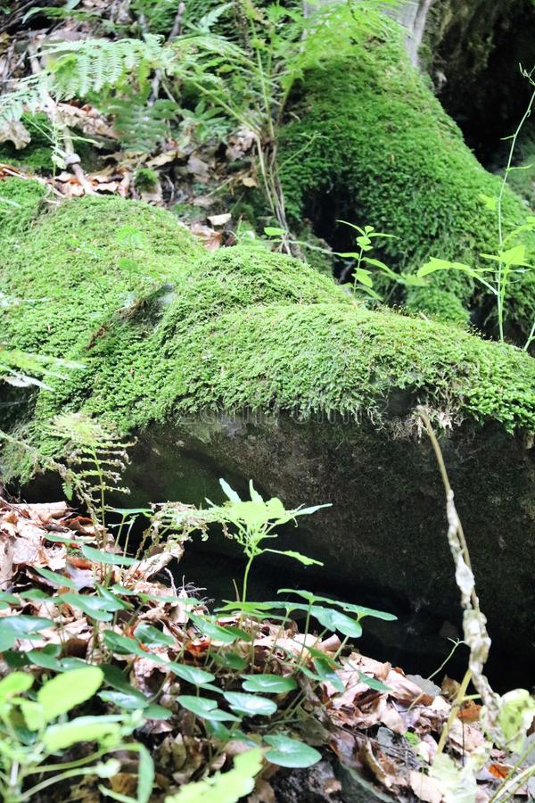 Pedras pitorescas no musgo Textura do musgo Arvoredo da floresta A floresta misteriosa fotos de stock royalty free