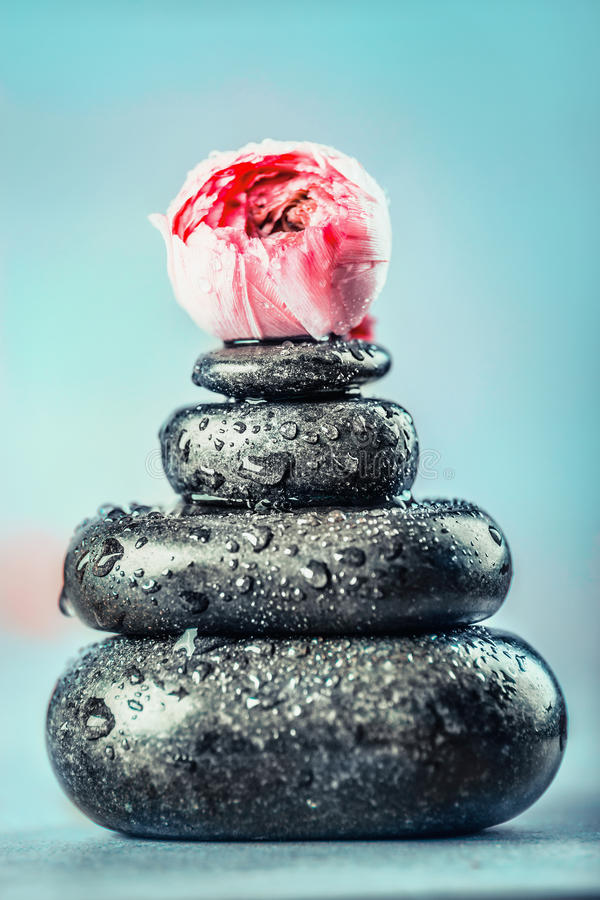 Pedras pretas quentes da massagem do basalto com gotas da água e flores no fundo azul Tratamento dos termas ou do bem-estar, vist foto de stock