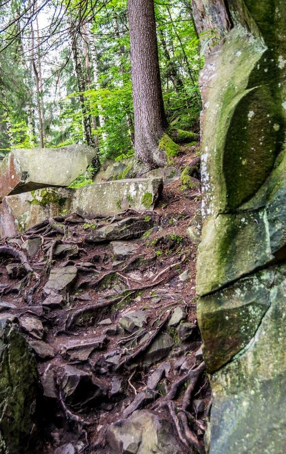 Pedras, raizes, árvores imagens de stock
