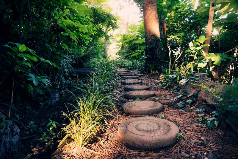 Pedras redondas ao longo de Olle Pathway através da floresta, Seogwipo, ilha de Jeju, Coreia fotografia de stock royalty free
