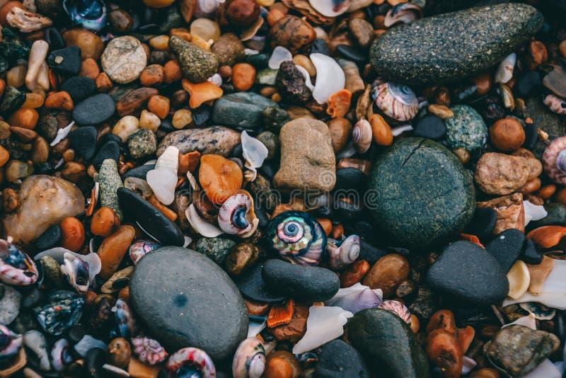 Pedras, rochas e shell em uma praia imagem de stock royalty free