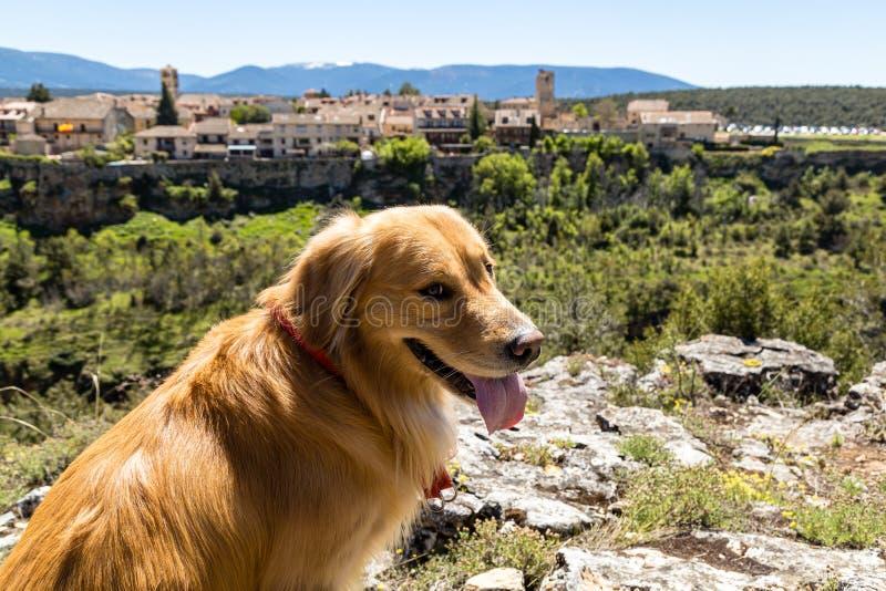 Pedraza, Castilla Y León, España: golden retriever delante del panorama del pueblo de Pedraza de Mirador el Tungueras Pedraza fotografía de archivo libre de regalías