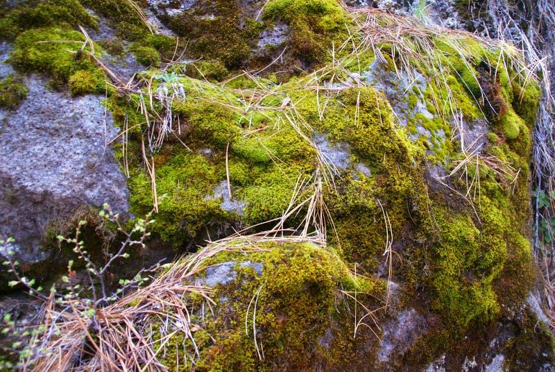 Pedregulhos do basalto com musgo & líquene foto de stock