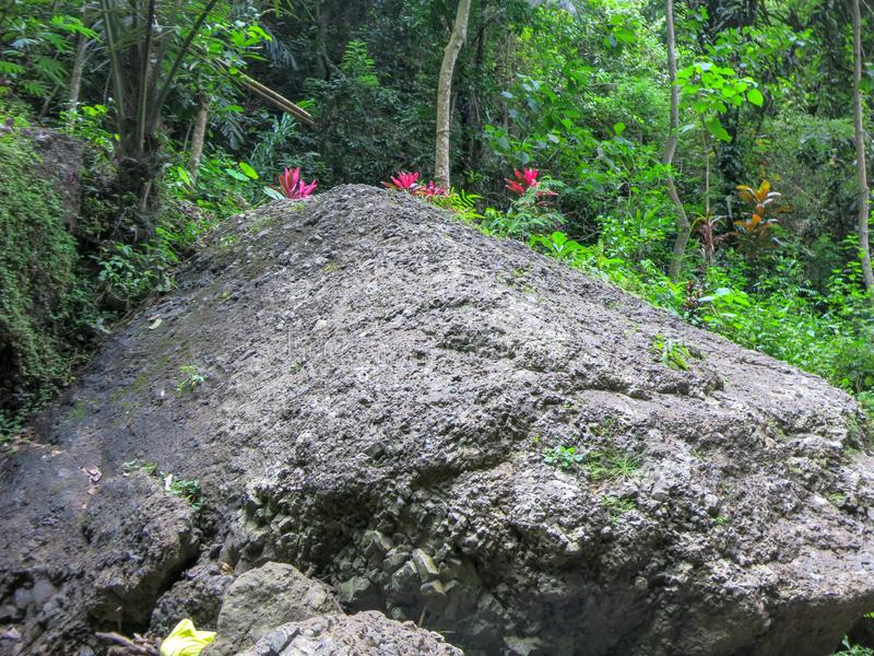 Pedregulhos enormes na vegetação selvagem da floresta tropical tropical e em muitas plantas bonitas Cor verde de todas as máscara imagens de stock royalty free