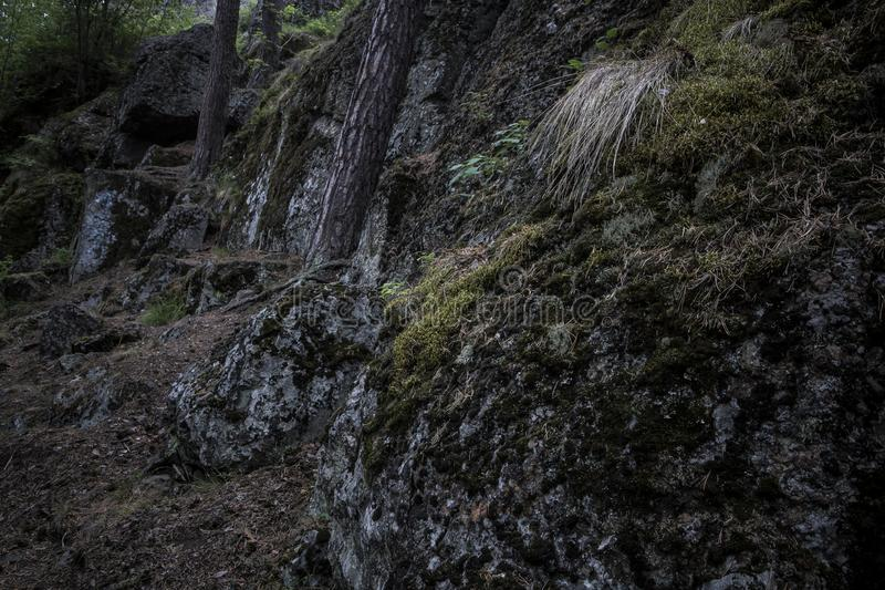 Pedregulhos escuros cobertos no musgo nas madeiras com as árvores que crescem acima imagem de stock