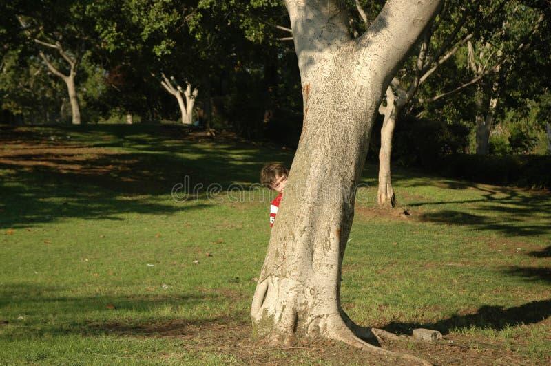 Peek. Boy hide behind a tree stock photos