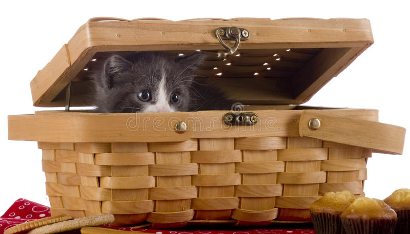 Peek-a-Boo Kitty. An adorable kitty peeking out of a small picnic basket surrounded by snack foods. Isolated on white stock photos