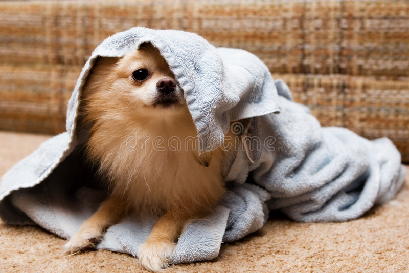 Peek-a-Boo Pup stock photo