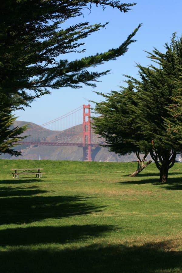A Peek at the Golden Gate Bridge. Peek at the Golden Gate bridge through the fir trees at Crissy Field. Located in beautiful San Francisco, California stock photo