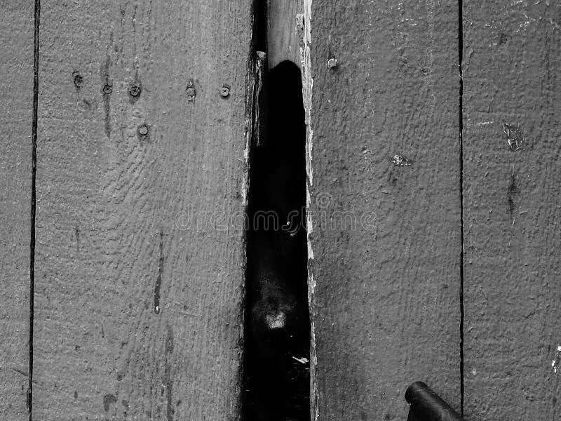 Peekaboo Widzię Ciebie! zdjęcie stock