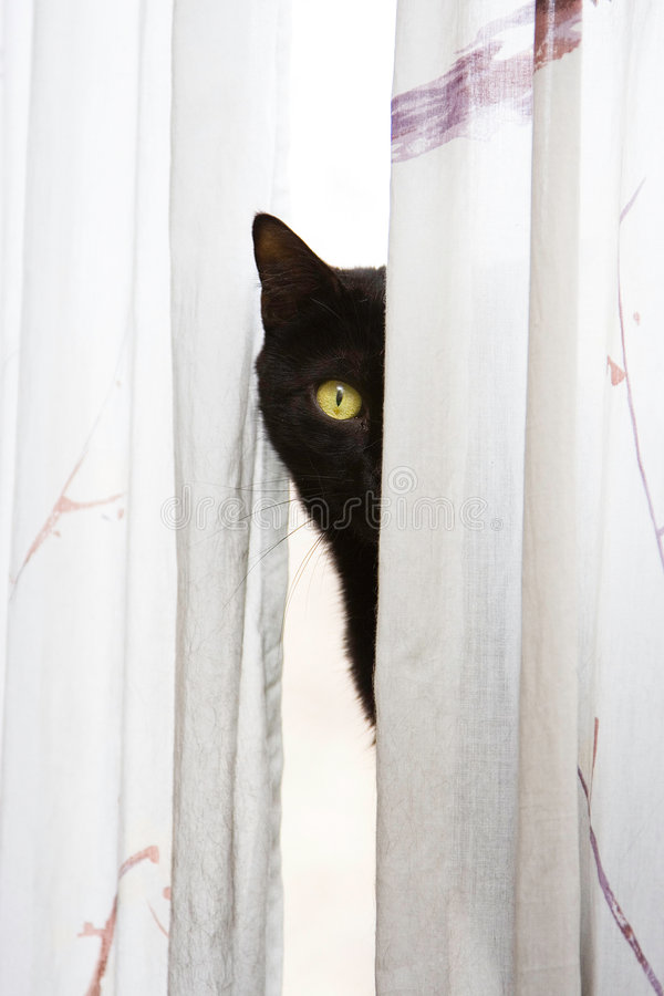Peeking Cat Stock Image