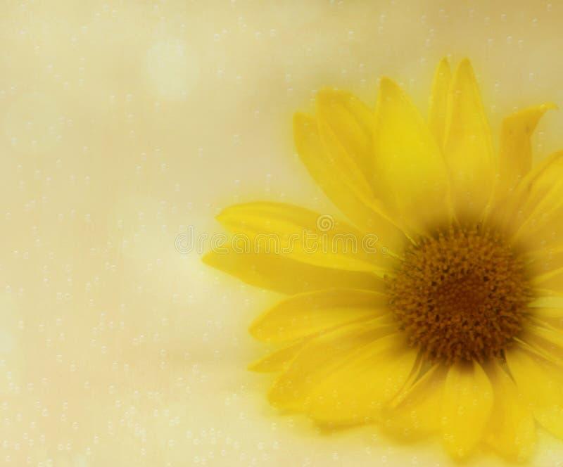 A peeking yellow flower. royalty free stock photo