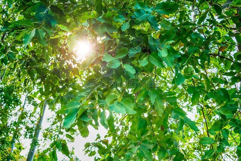 Download Peeky Sonne Sneky stockfoto. Bild von clear, alleine - 106804576