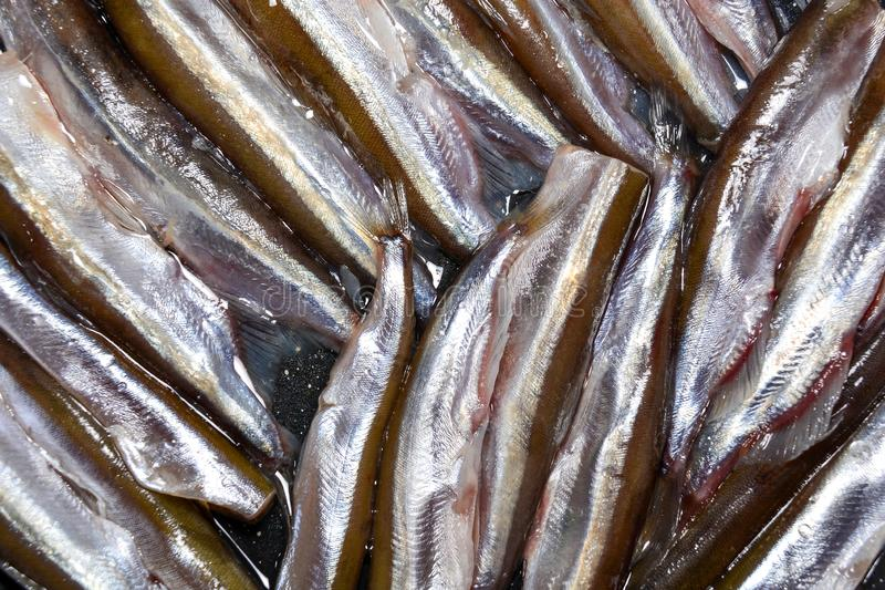 Peeled capelin fish. abstract food background. Fresh fish in a pan ready to cook.  royalty free stock image