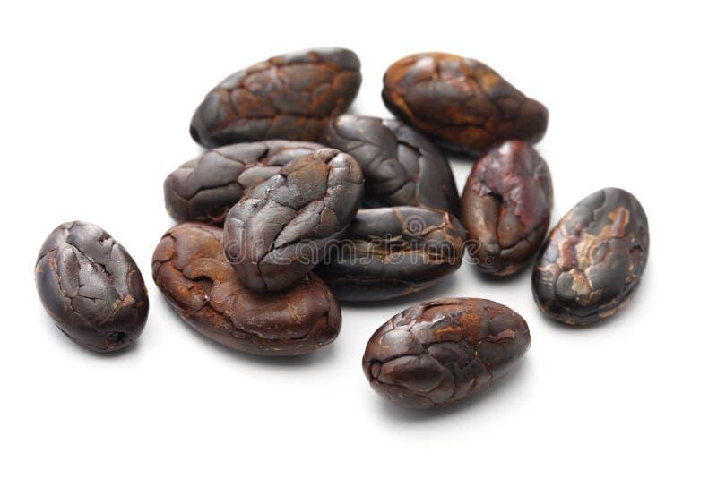 Peeled ha arrostito le fave di cacao del cacao immagini stock
