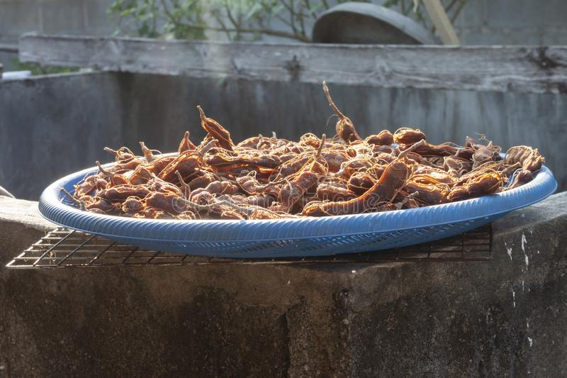 Peeled tamarind in a plastic basket to sunlight in order to make tamarind paste is an ingredient in Thai food. Peeled tamarind in a blue plastic basket expose royalty free stock photo