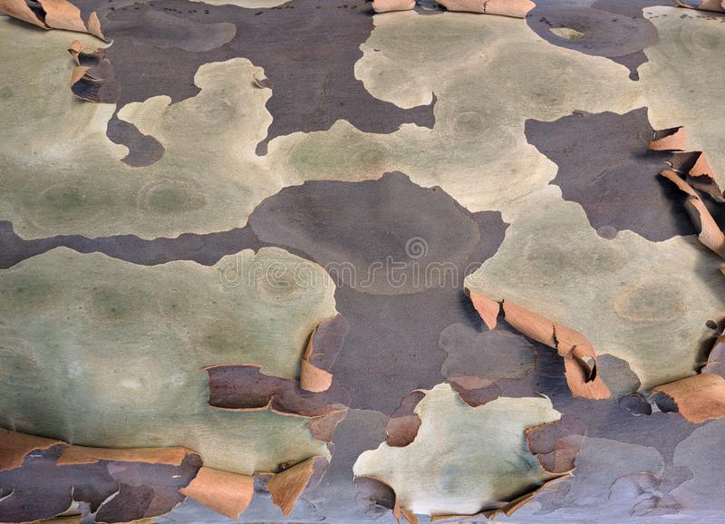 Peeling bark organic composition of soft colour tones, subtle but attractive royalty free stock image