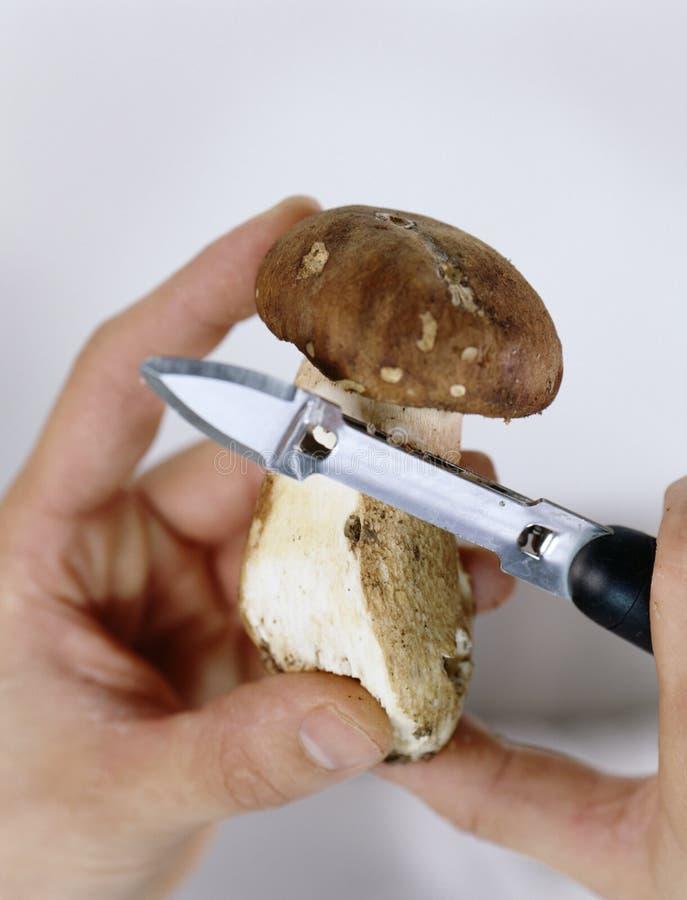 Download Peeling a boletus mushroom stock image. Image of boletus - 23705747