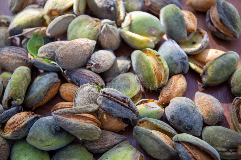 Peeling fresh almonds on an outdoor table in a sunny summer day. Home grown bio  food, farm life, country life. Peeling fresh almonds on an outdoor table in a royalty free stock photo