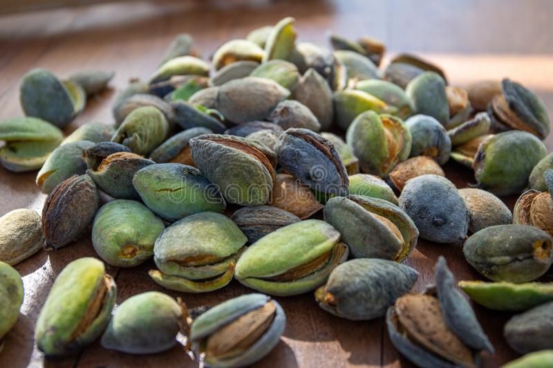 Peeling fresh almonds on an outdoor table in a sunny summer day. Home grown bio  food, farm life, country life. Peeling fresh almonds on an outdoor table in a stock photography