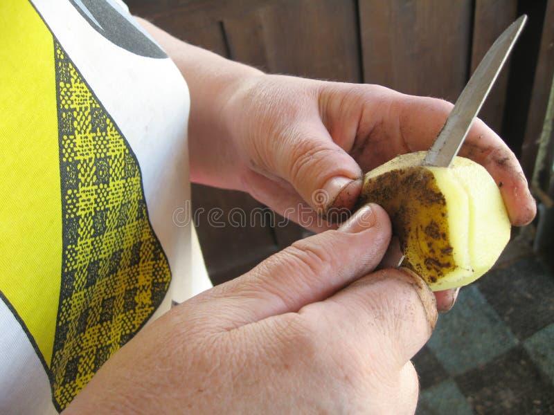 Peeling potatoes royalty free stock photo