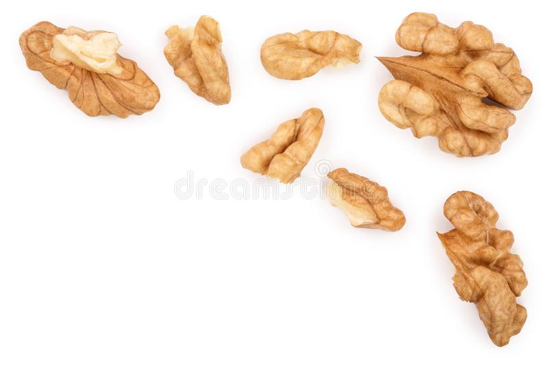 Peelled Walnuts isolated on white background with copy space for your text. Top view. Flat lay.  vector illustration
