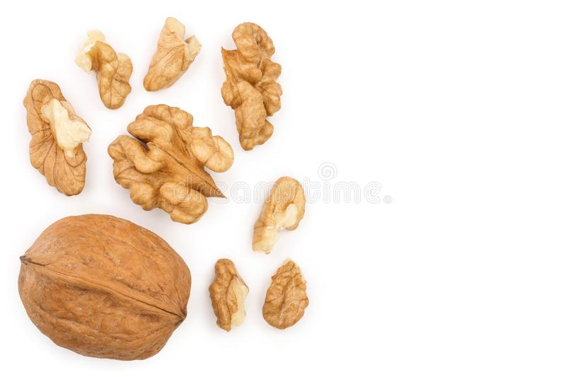 Peelled Walnuts isolated on white background with copy space for your text. Top view. Flat lay.  stock illustration