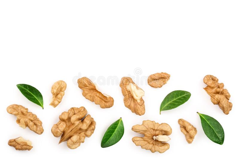 Peelled Walnuts with leaves isolated on white background with copy space for your text. Top view. Flat lay.  vector illustration