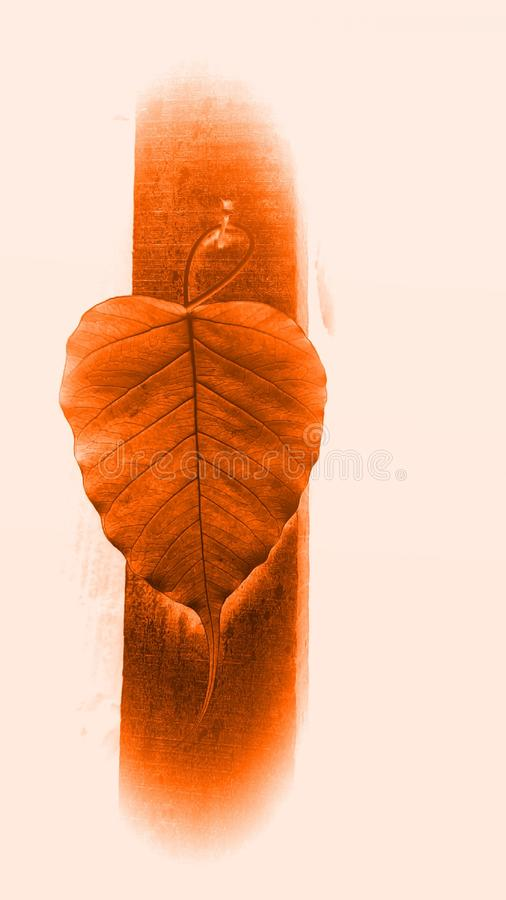 Peepal-Baum-Blattfall auf hölzernen Säulen lizenzfreie stockfotografie
