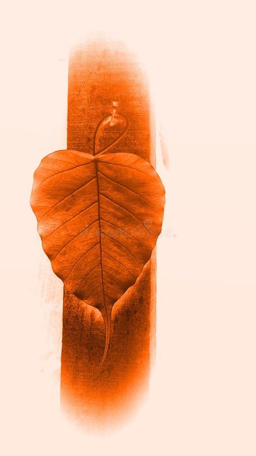 Peepal tree  leaf hang on wooden pillars royalty free stock photography