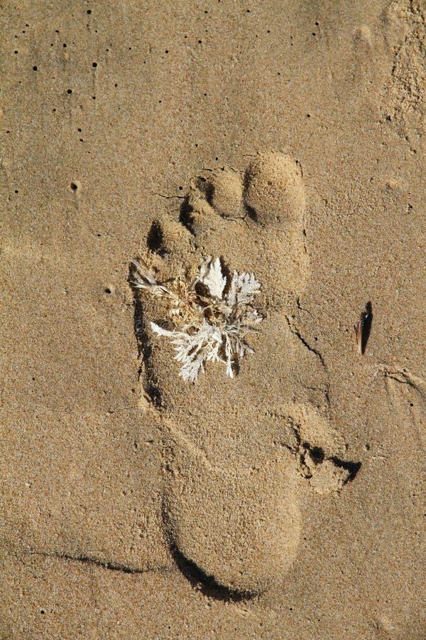 Pegada com plâncton vegetal branco na praia imagens de stock