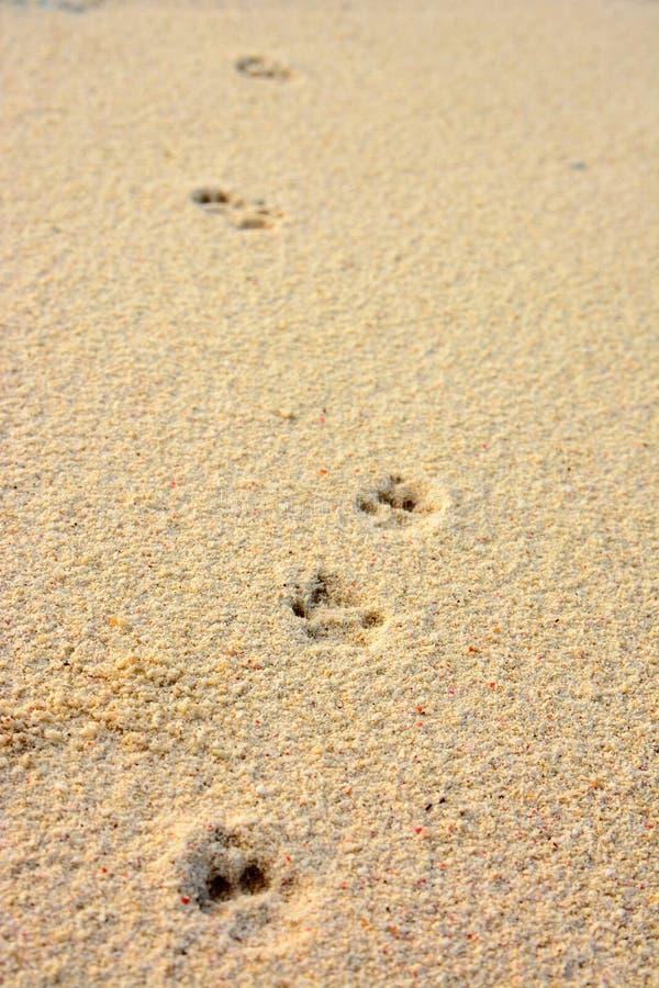 Pegada do gato em uma areia coral imagens de stock royalty free