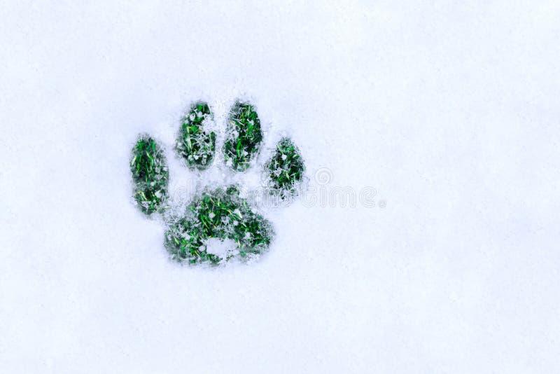 Pegada na neve sob a forma de uma pata do ` s do gato com gras verdes imagens de stock