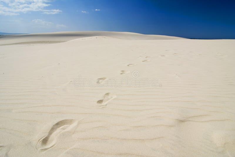 A pegada no deserto foto de stock royalty free
