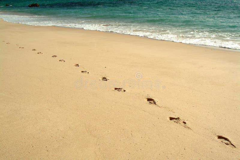 Pegadas, andando na praia imagens de stock