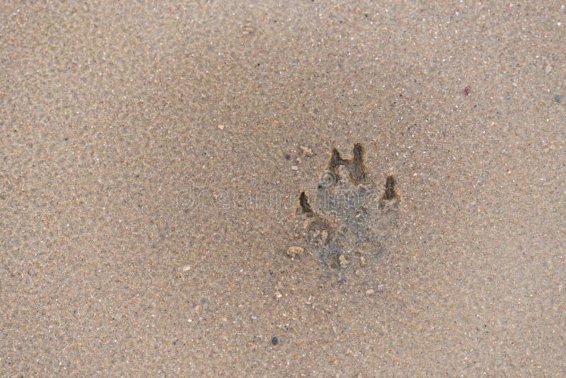 Pegadas do cão em uma praia da areia fotos de stock