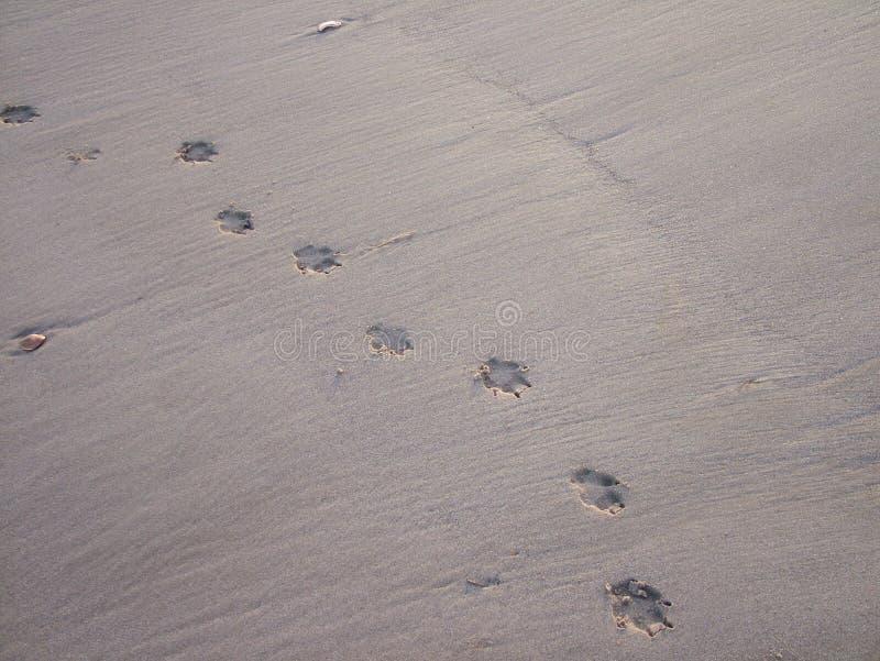 Pegadas do cão na praia fotos de stock