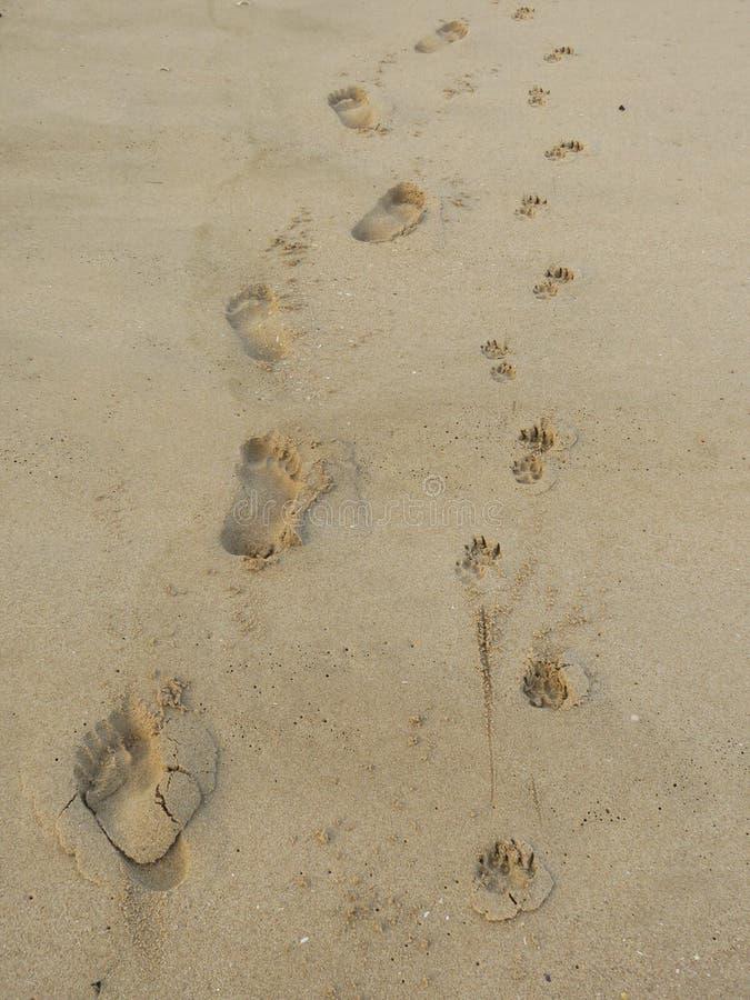 Pegadas do ser humano e do cão na areia da praia fotos de stock