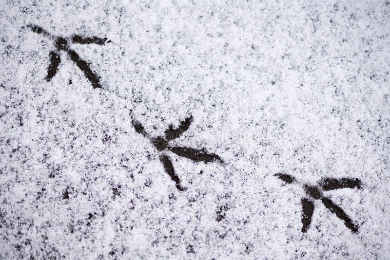 Pegadas dos pássaros na neve fotos de stock