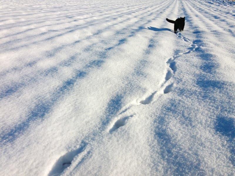 Pegadas em uma neve e em um gato preto na distância fotografia de stock royalty free
