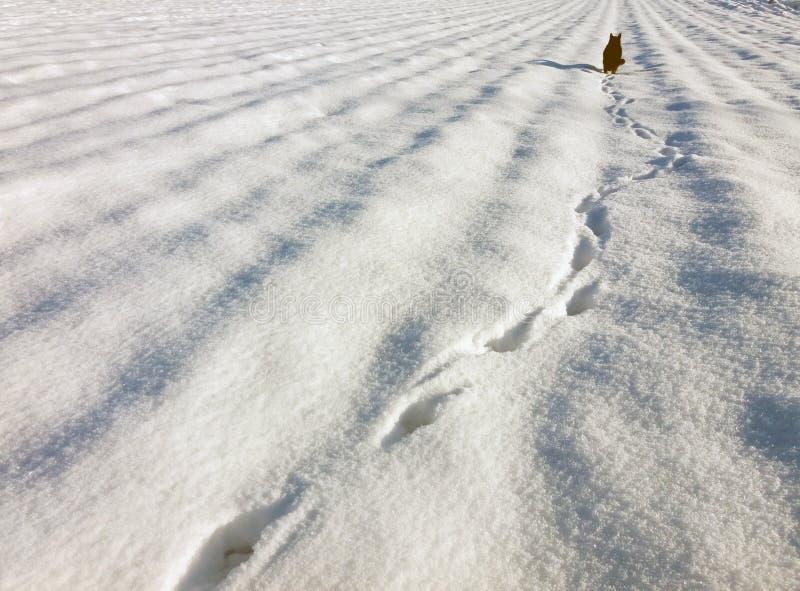 Pegadas em uma neve e em um gato preto na distância imagens de stock