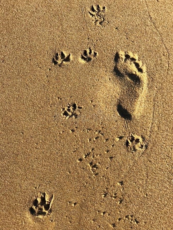 Pegadas em uma praia fotografia de stock royalty free