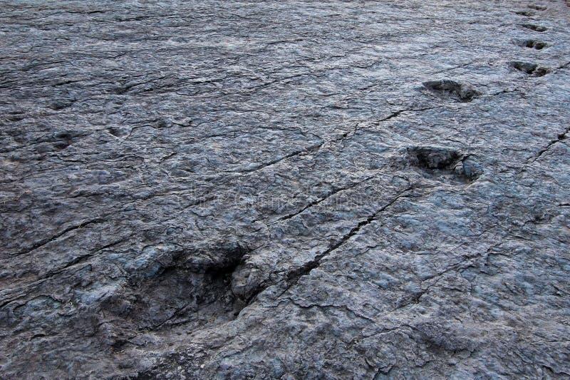 Pegadas enormes do dinossauro, Maragua, Bolívia foto de stock