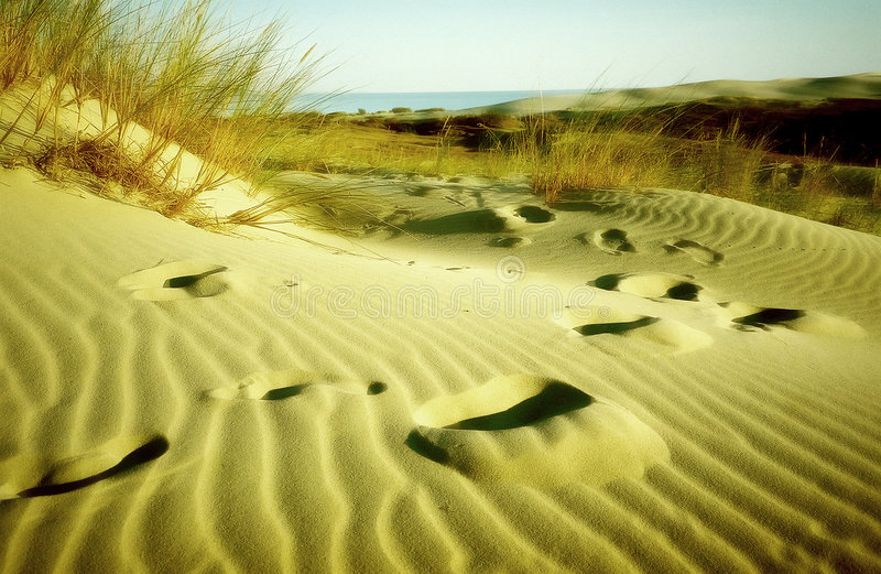 Pegadas Na Areia Imagens de Stock Royalty Free