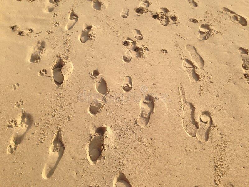 Download Pegadas na areia foto de stock. Imagem de areia, mulher - 65577620