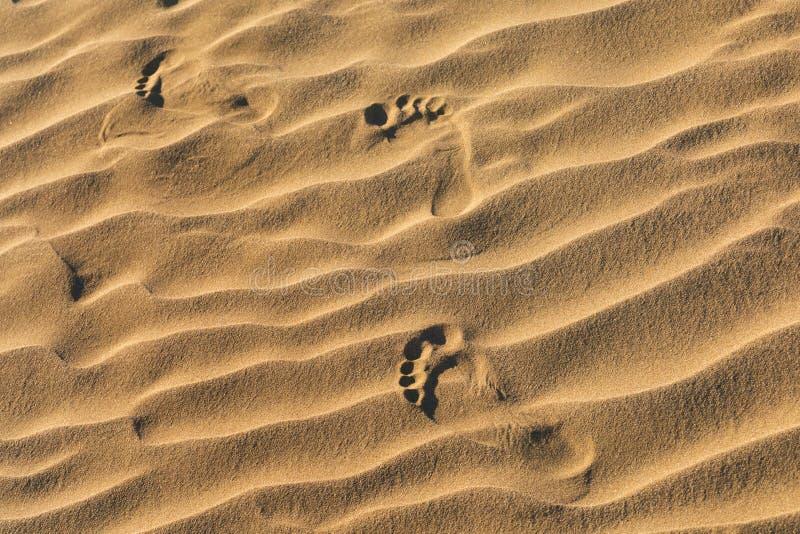 Pegadas na areia Luz solar do amanhecer através das dunas e das montanhas de areia na duna lisa do Mesquite, parque nacional de V fotografia de stock