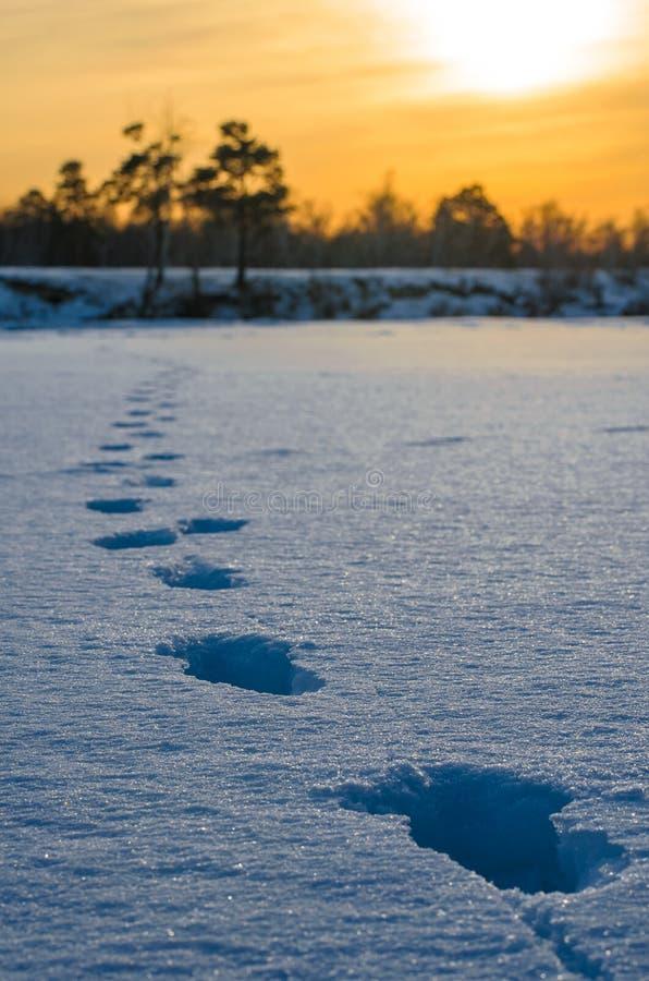 Pegadas na neve. fotografia de stock