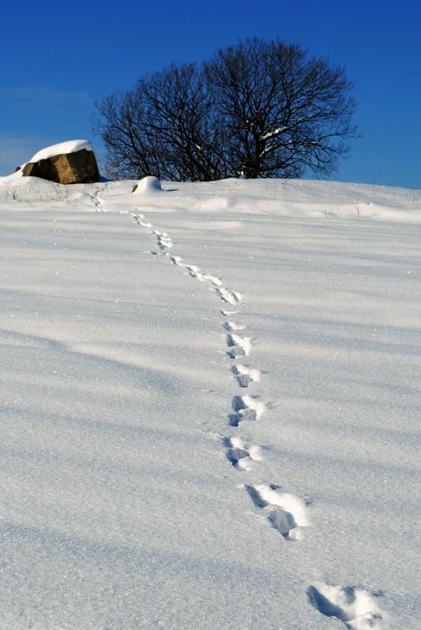 Pegadas na neve imagens de stock