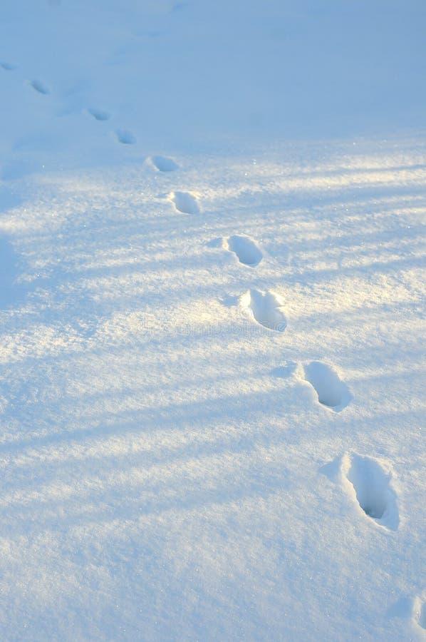 Pegadas na neve branca fresca Close up dos passos na neve profunda fotografia de stock